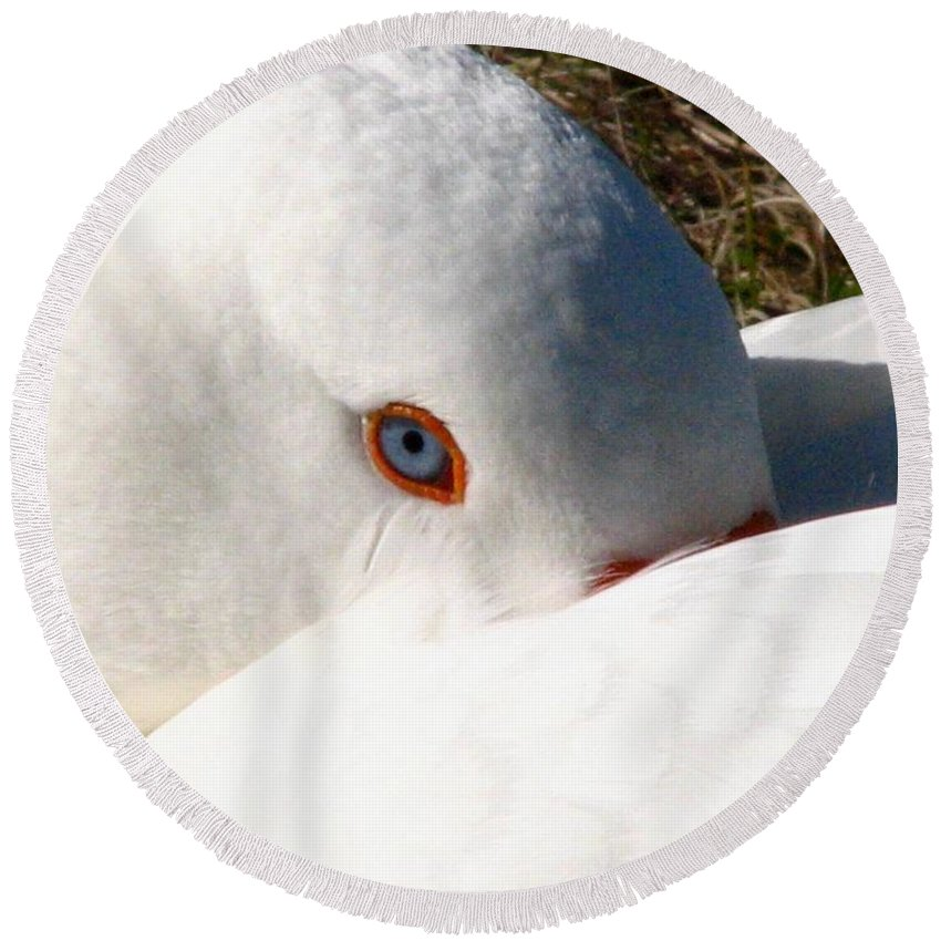 Geese Round Beach Towel featuring the photograph Keeping A Watchful Eye by J M Farris Photography