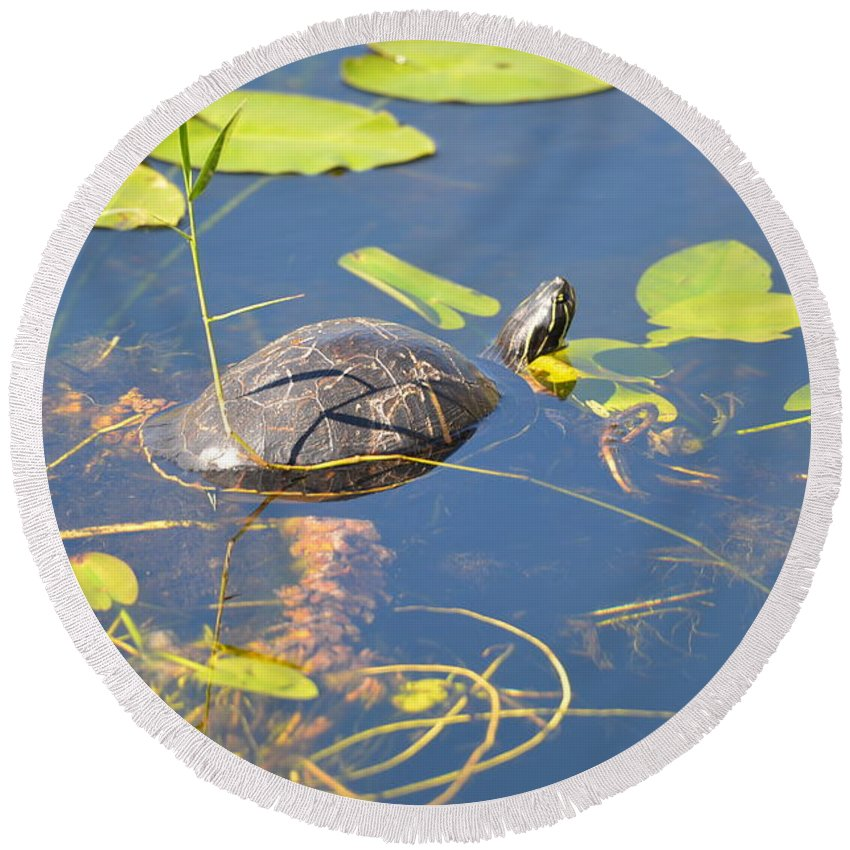 Everglades National Park Round Beach Towel featuring the photograph Keeping His Head Above Water by Tammy Mutka