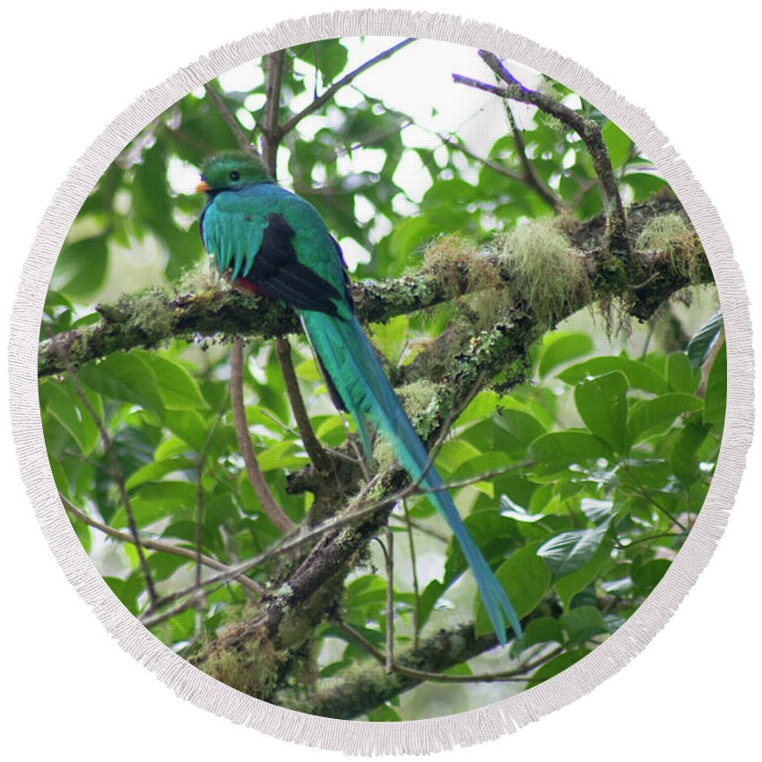 Resplendent Quetzal Round Beach Towel featuring the photograph Keeping Watch by Wes Hanson