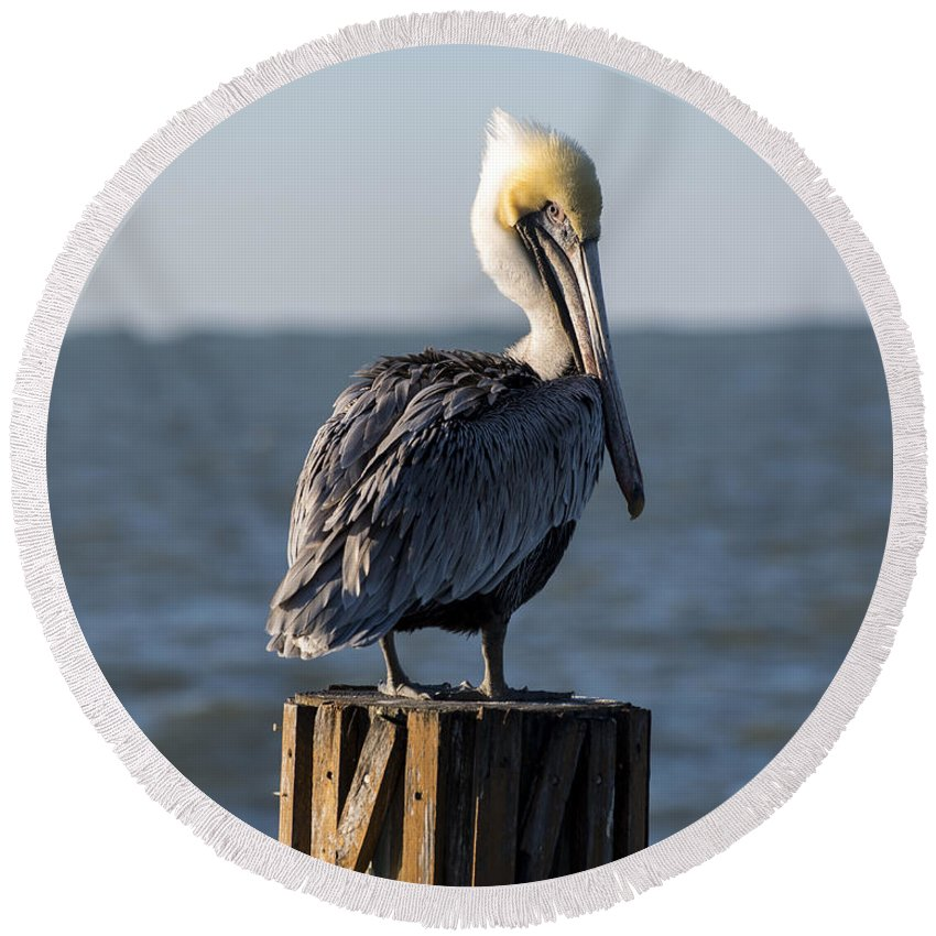 Key Largo Round Beach Towel featuring the photograph Key Largo Florida Yellow Headed Pelican by Toby McGuire