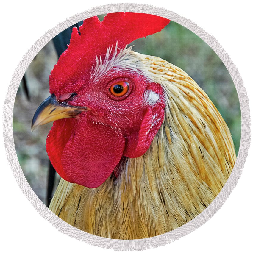 Rooster Round Beach Towel featuring the photograph Key West Chicken by Bob Slitzan