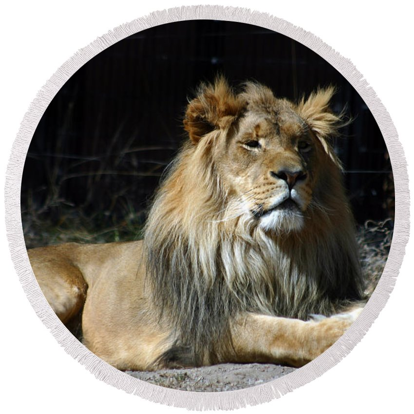 Lion Round Beach Towel featuring the photograph King by Anthony Jones