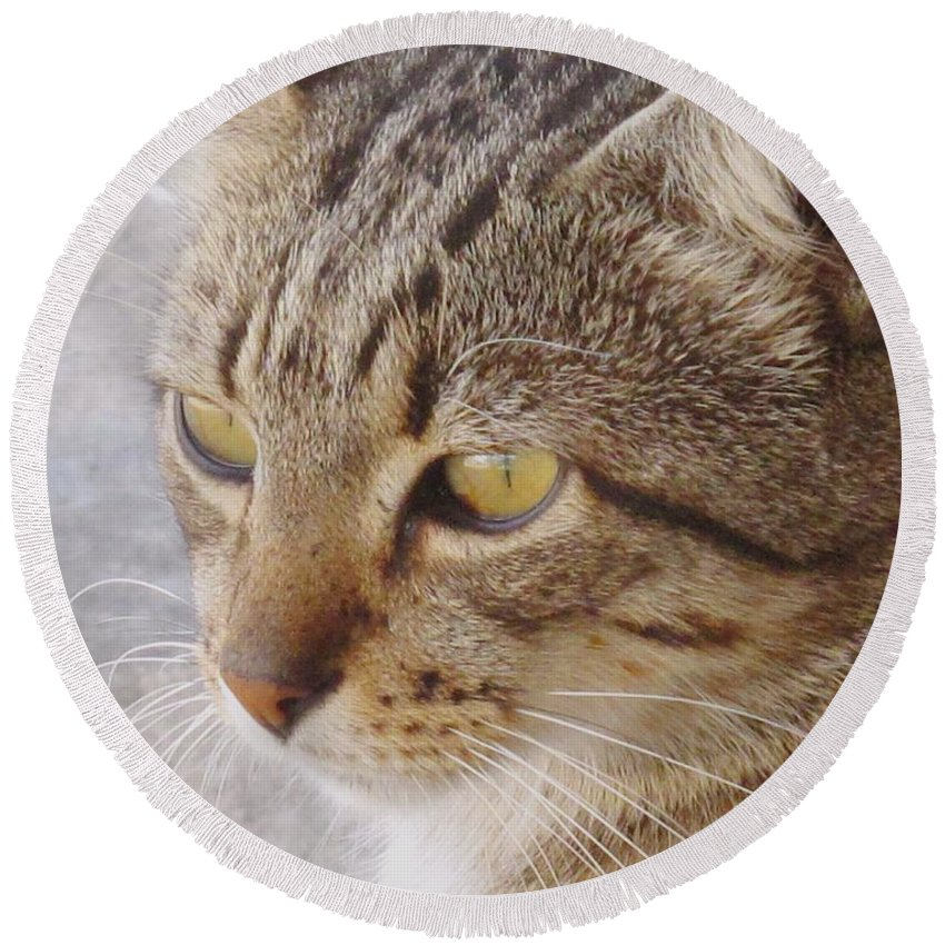 Cat Round Beach Towel featuring the photograph King Cat by Ian MacDonald