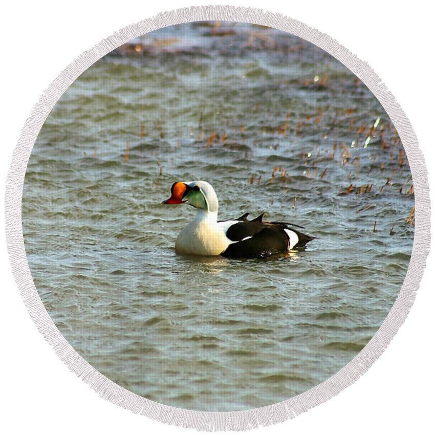 King Eider Round Beach Towel featuring the photograph King Eider by Anthony Jones