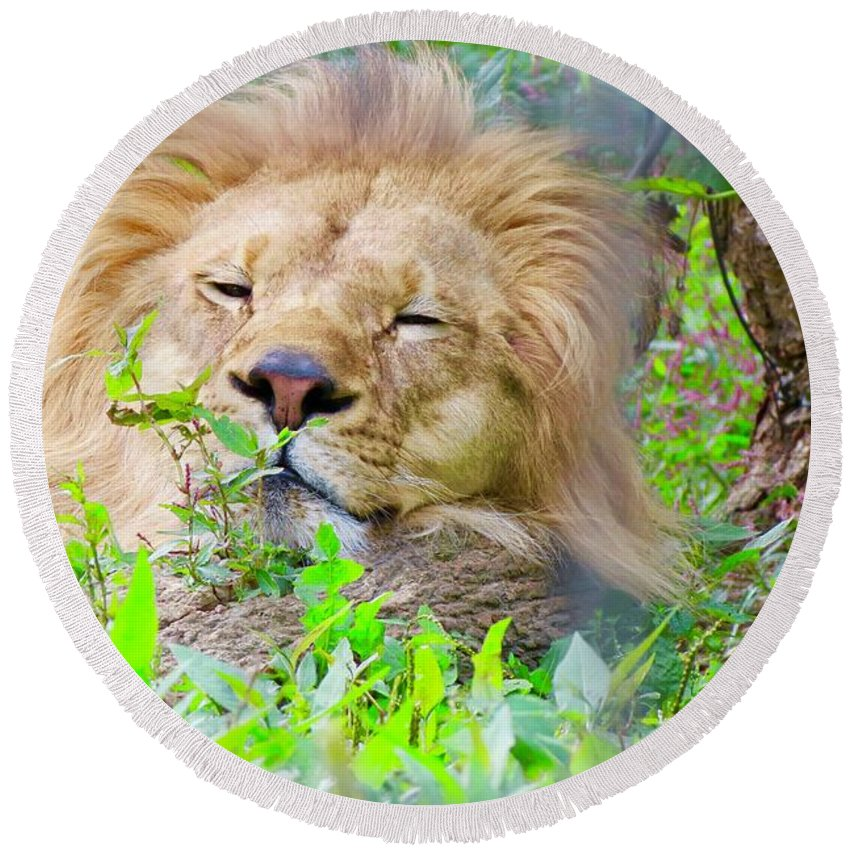 King Round Beach Towel featuring the photograph King Of The Jungle by Kenneth Summers