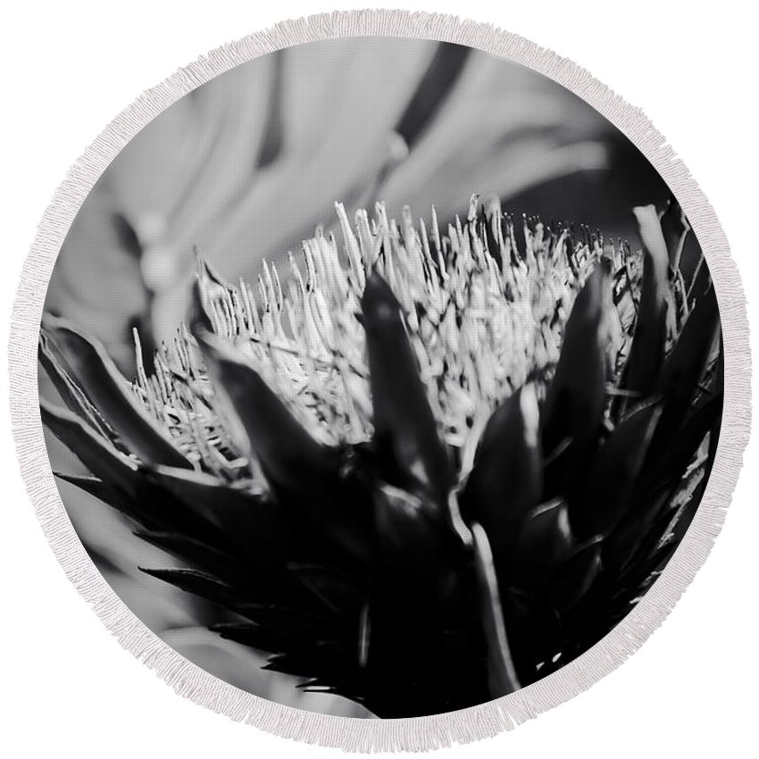 King Protea Round Beach Towel featuring the photograph King Protea Exotic Tropical Flowers by Sharon Mau