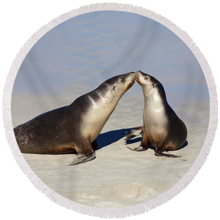 Sea Lion Round Beach Towel featuring the photograph Kiss by Mike Dawson