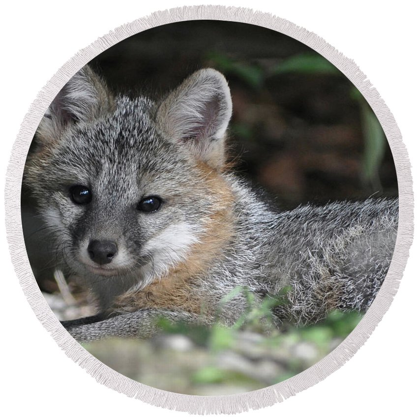 Kit Fox Round Beach Towel featuring the photograph Kit Fox1 by Torie Tiffany