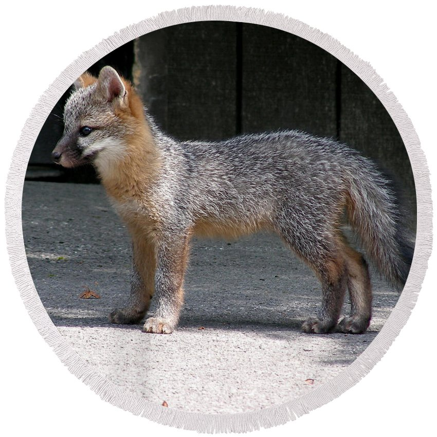 Kit Fox Round Beach Towel featuring the photograph Kit Fox14 by Torie Tiffany