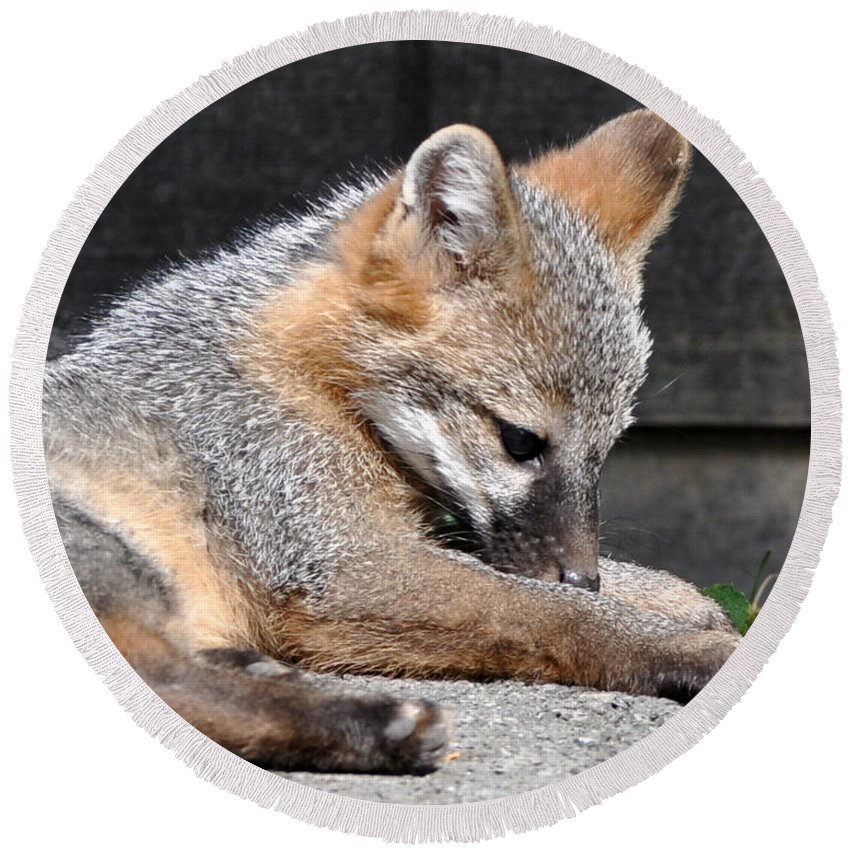 Kit Fox Round Beach Towel featuring the photograph Kit Fox8 by Torie Tiffany