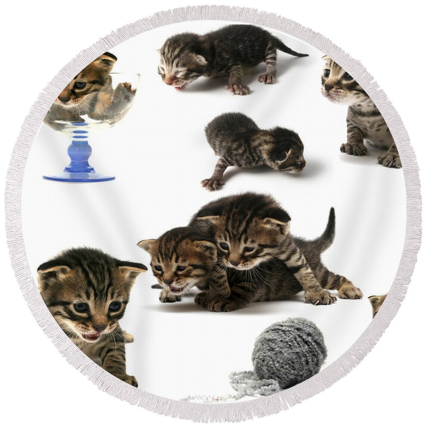 Cat Cats Round Beach Towel featuring the photograph Kitten Collage by Yedidya yos mizrachi