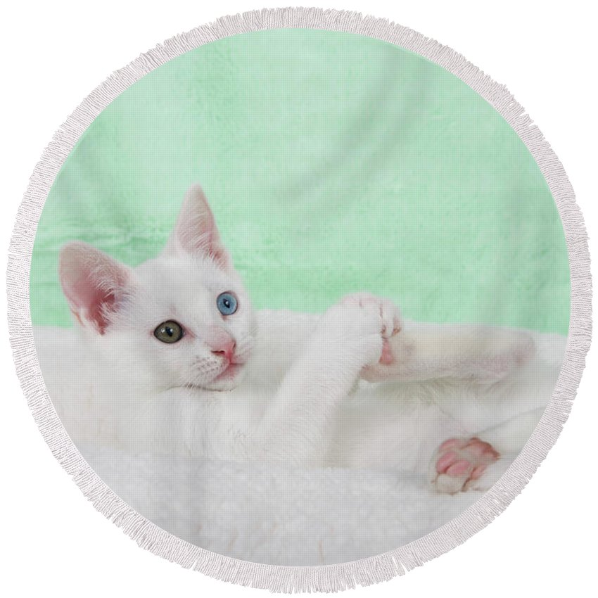 Heterochromia Round Beach Towel featuring the photograph Kittens Play With Toes Too by Sheila Fitzgerald