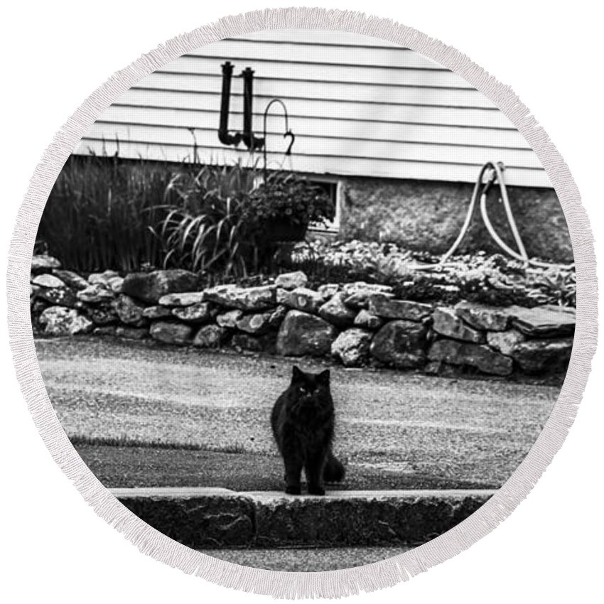 Moon Round Beach Towel featuring the photograph Kitty Across The Street Black And White by Marina McLain