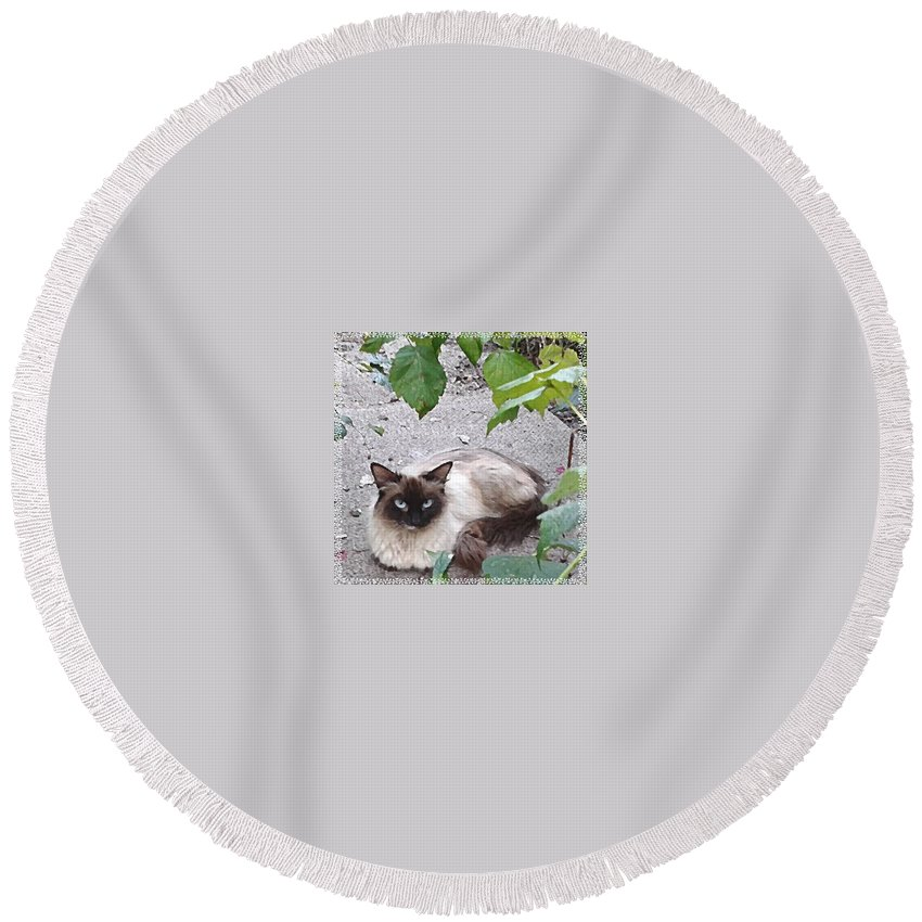 Angelandspot Round Beach Towel featuring the photograph Kitty by Cassie Peters