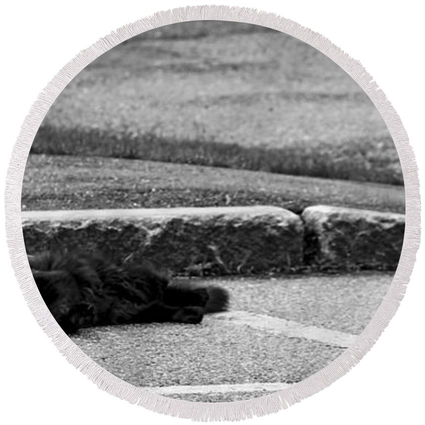 Moon Round Beach Towel featuring the photograph Kitty In The Street Black And White by Marina McLain