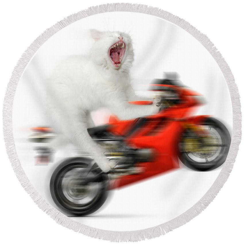 Wheelie Round Beach Towel featuring the photograph Kitty On A Motorcycle Doing A Wheelie by Maxim Images Prints