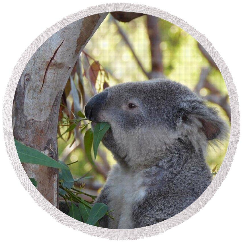 Koala Round Beach Towel featuring the photograph Koala Time by Chad Kroll