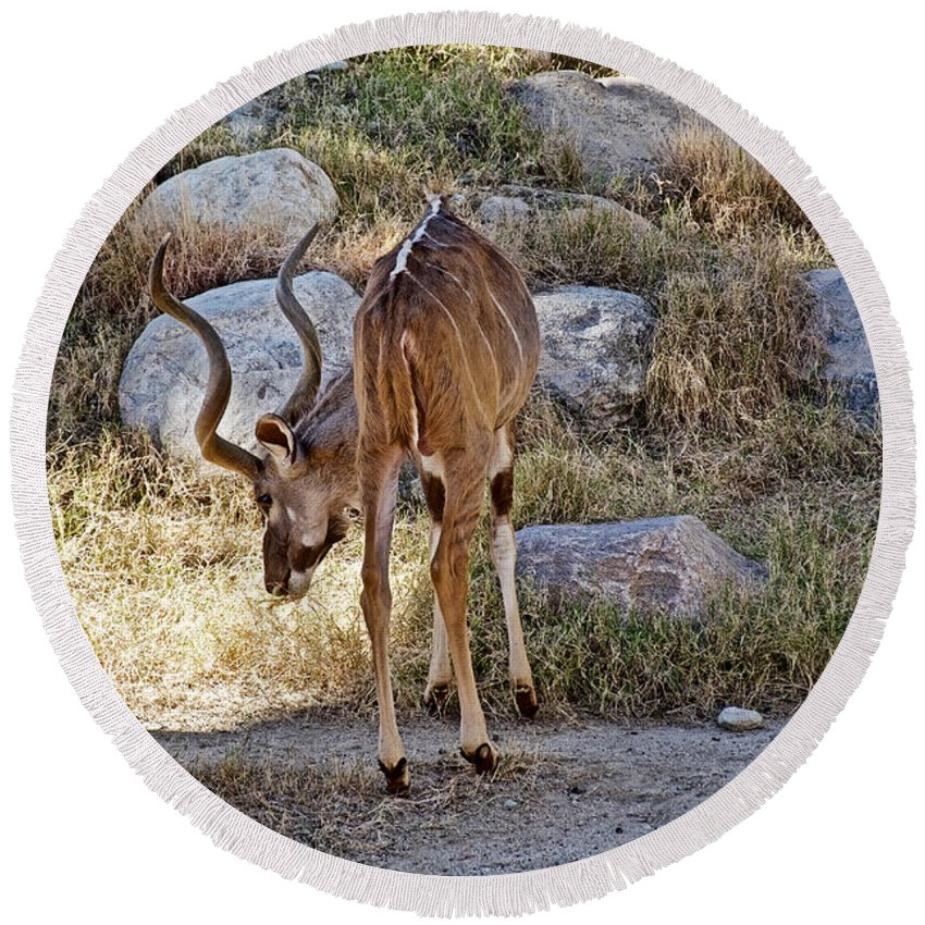 Kudu Near A Waterhole In Living Desert Zoo And Gardens In Palm Desert Round Beach Towel featuring the photograph Kudu Near A Waterhole In Living Desert Zoo And Gardens In Palm Desert-california by Ruth Hager