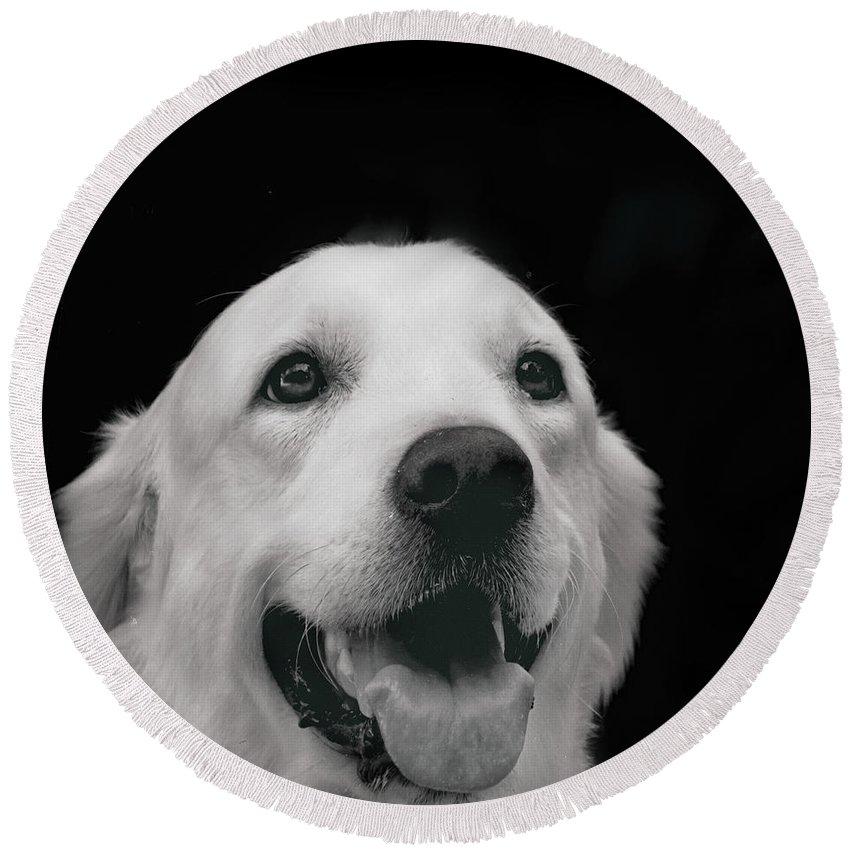 Labrador Smiling B W  By Irina Safonova Dog Round Beach Towel featuring the photograph Labrador Smiling B W by Irina Safonova
