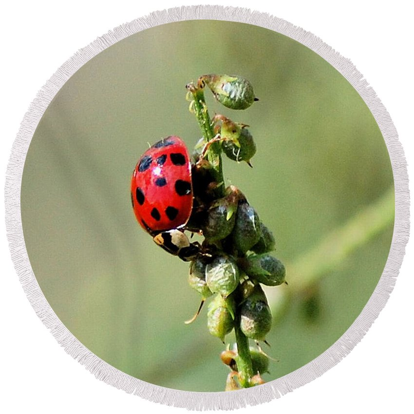 Landscape Round Beach Towel featuring the photograph Lady Beetle by David Lane