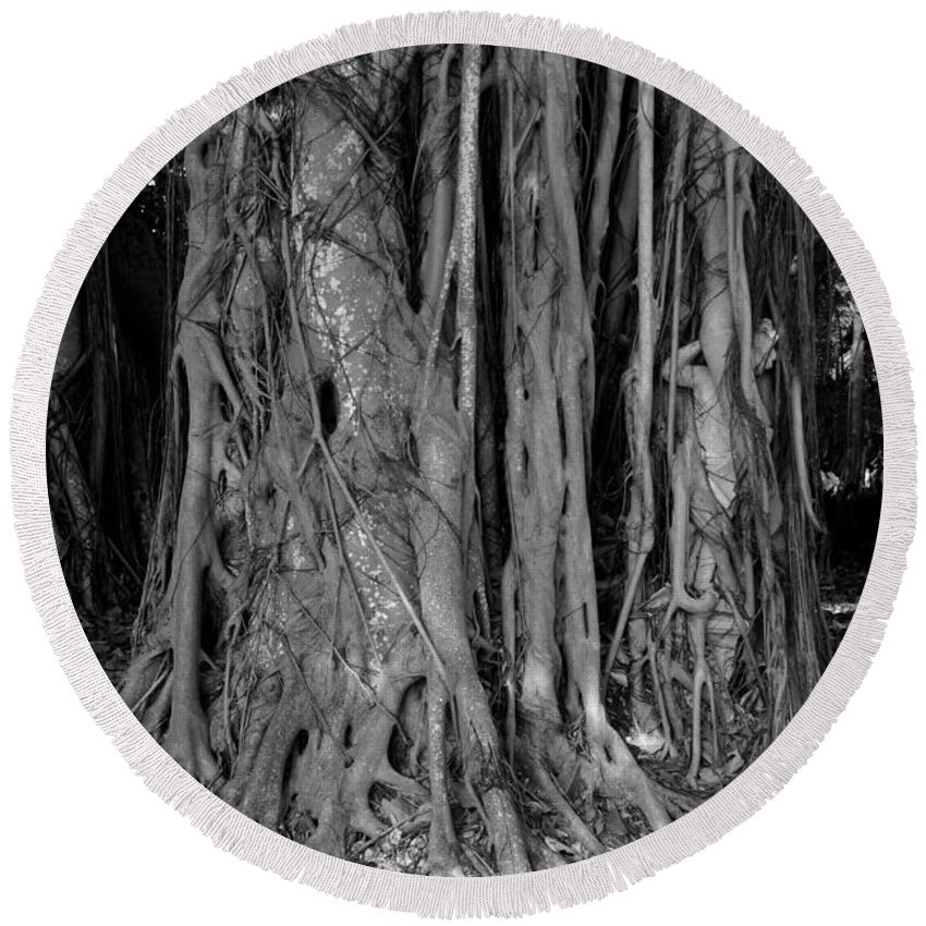 Banyan Trees Round Beach Towel featuring the photograph Lady In The Banyans by David Lee Thompson
