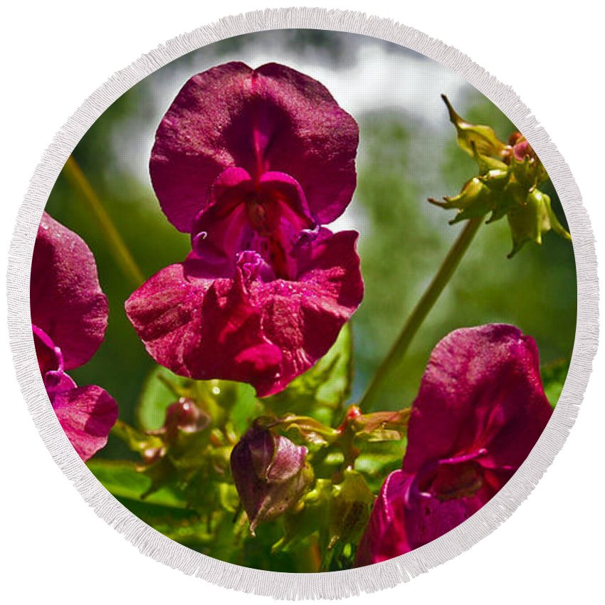 Lady Slipper Round Beach Towel featuring the photograph Lady Slipper Orchid Dan146 by Howard Stapleton