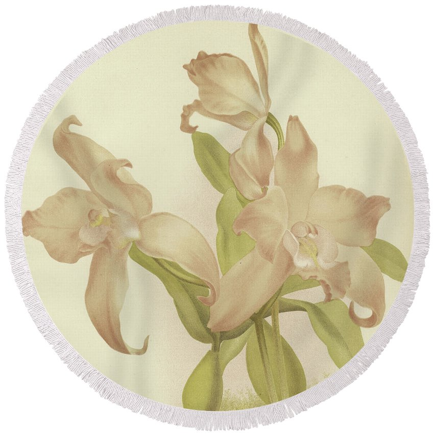 Orchid Round Beach Towel featuring the painting Laelia Autumnalis Venusta by English School