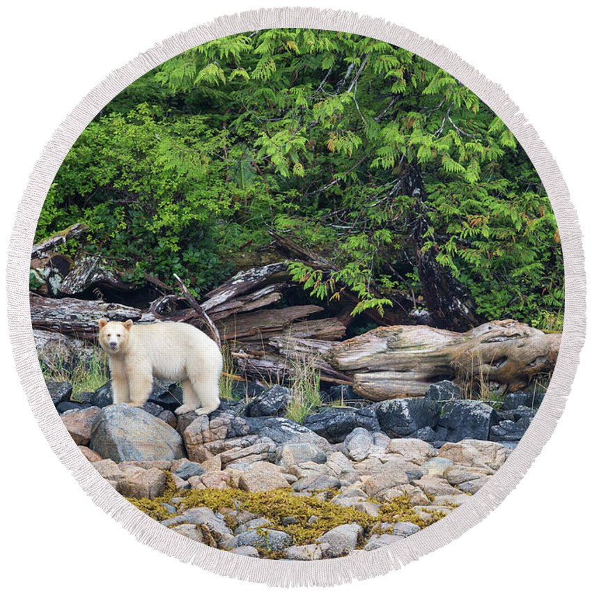 Spirit Bear Round Beach Towel featuring the photograph Land Of The Spirit Bear by Max Waugh