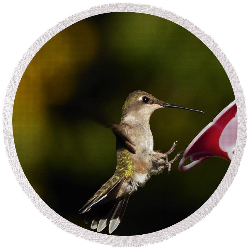 Hummingbird Round Beach Towel featuring the photograph Landing Gear Down by Dwight Eddington