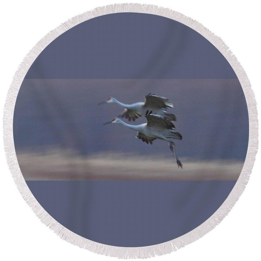 Sandhill Cranes Birds Photography Photograph Wildlife Flying Flight Round Beach Towel featuring the photograph Landing Gear Down by Shari Jardina