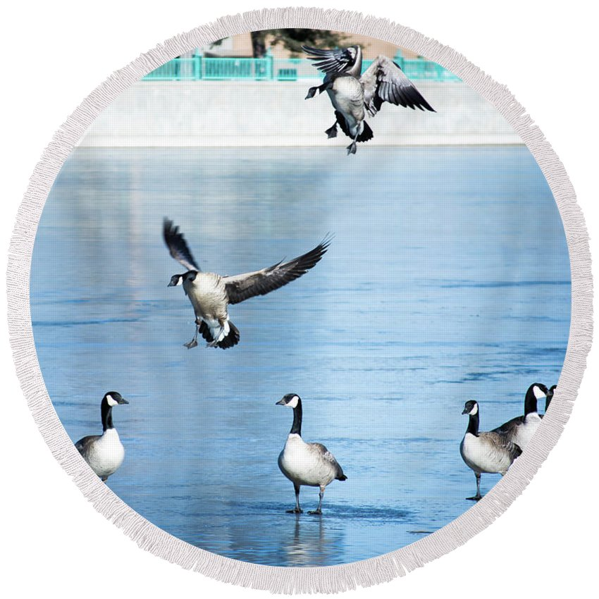 Canadian Round Beach Towel featuring the photograph Landing Gear Lowered For An Ice Set Down by Cary Leppert
