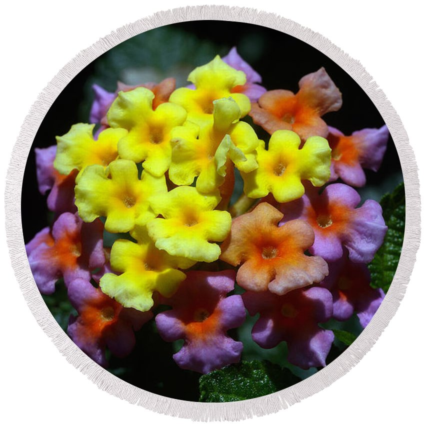 Natural Colours Round Beach Towel featuring the photograph Lantana Flower Chips by Morris Keyonzo