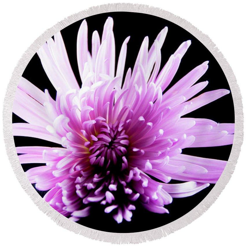 Macro Round Beach Towel featuring the photograph Large Purple Chrysanthemum-1 by Jennifer Wick