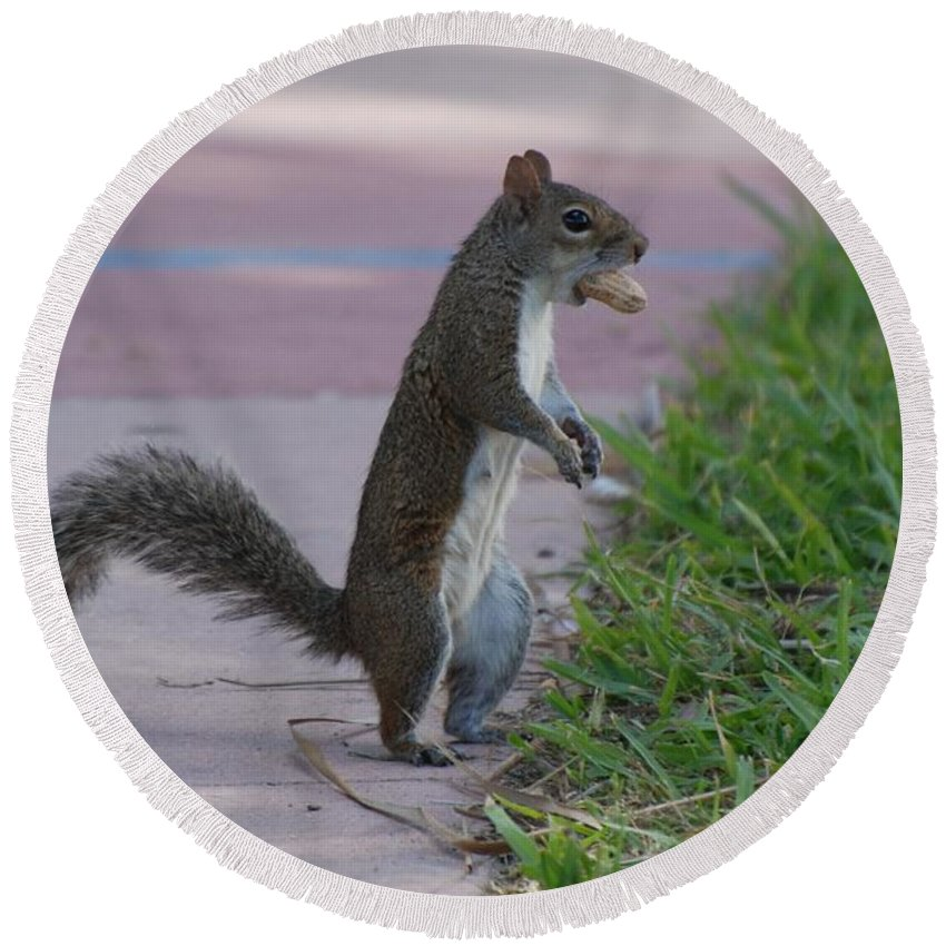 Squirrels Round Beach Towel featuring the photograph Last Squirrel Standing by Rob Hans