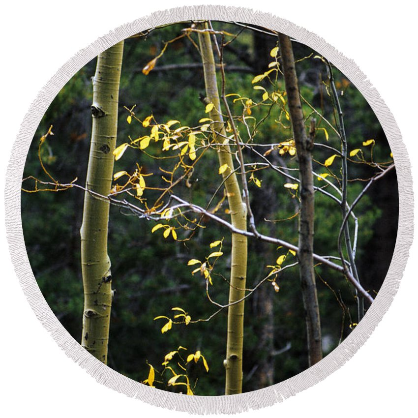 Aspen Round Beach Towel featuring the photograph Late Aspen by Jerry McElroy