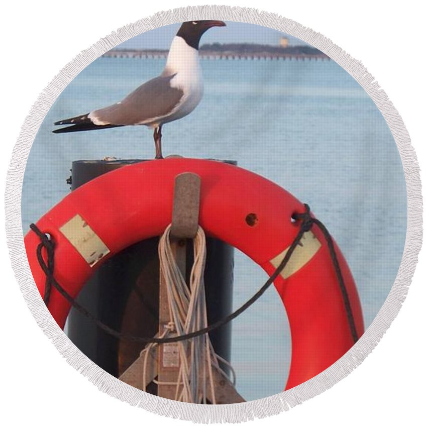 Gull Round Beach Towel featuring the photograph Laughing Gull At Lewes by Eric Schiabor