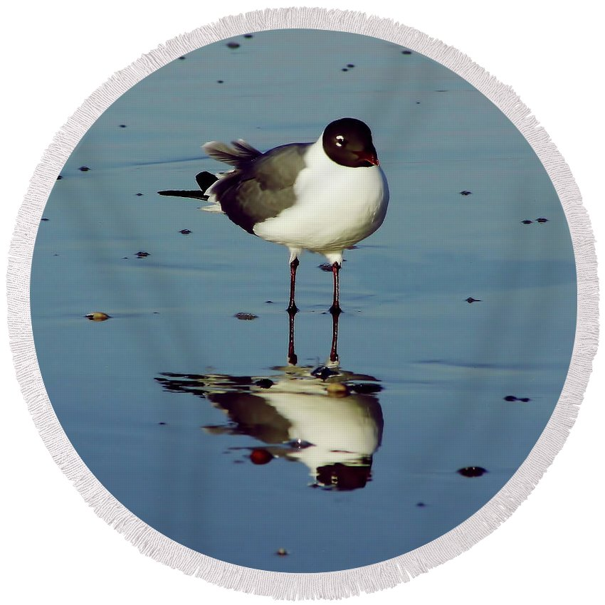 Bird Round Beach Towel featuring the photograph Laughing Gull by D Hackett