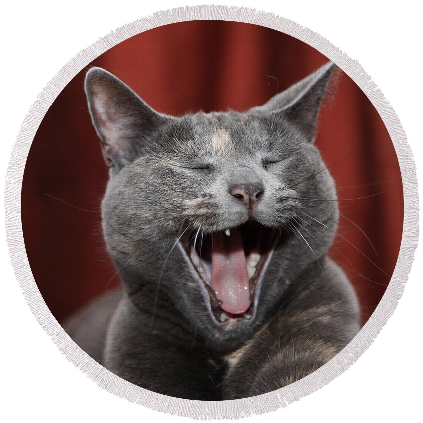 Kitty Round Beach Towel featuring the photograph Laughing Kitty by Amanda Barcon