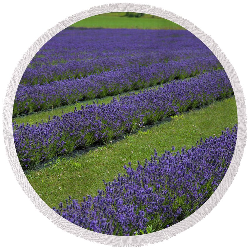 Lavender Round Beach Towel featuring the photograph Lavendar Rows by Timothy Johnson