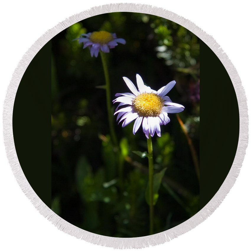 Lavender Wild Flowers Round Beach Towel featuring the photograph Lavender Friends by Chris Brannen