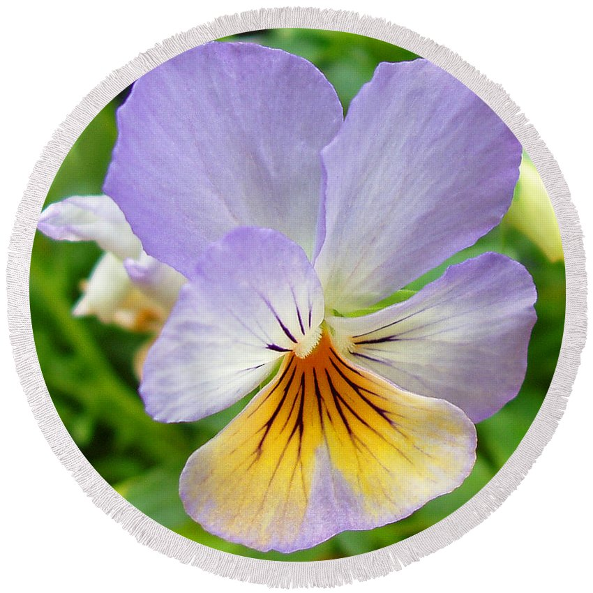 Pansy Round Beach Towel featuring the photograph Lavender Pansy by Nancy Mueller