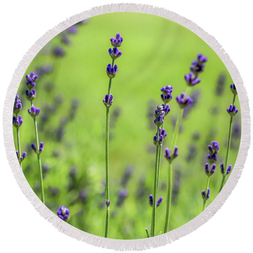 Lavender Round Beach Towel featuring the photograph Lavender Spikes by Robert Anastasi