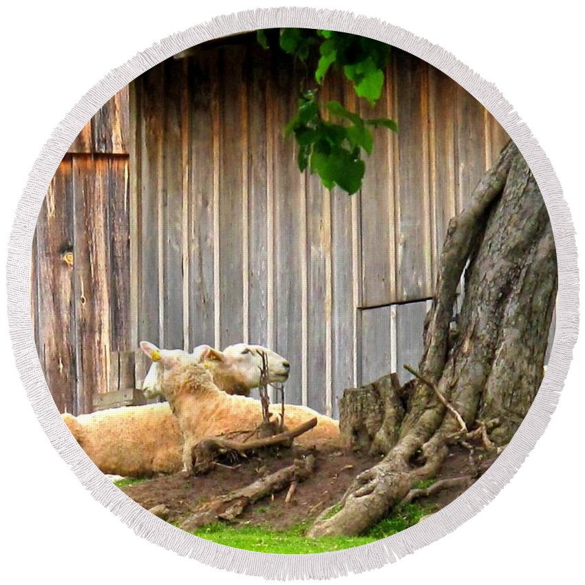 Sheep Round Beach Towel featuring the photograph Lawnmowers At Rest by Ian MacDonald