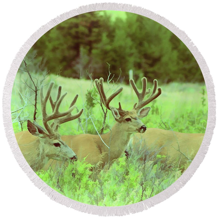 Deer Round Beach Towel featuring the photograph Lazy Day by Roland Stanke