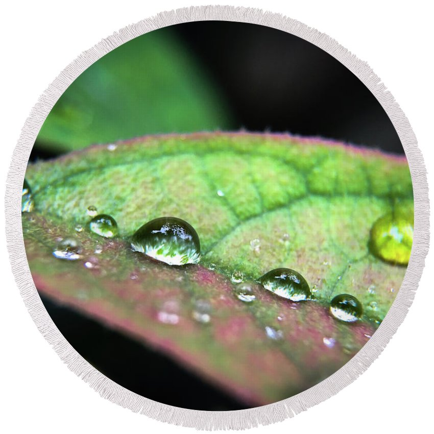 Macro Round Beach Towel featuring the photograph Leaf Veins And Raindrops by Robert Yaeger