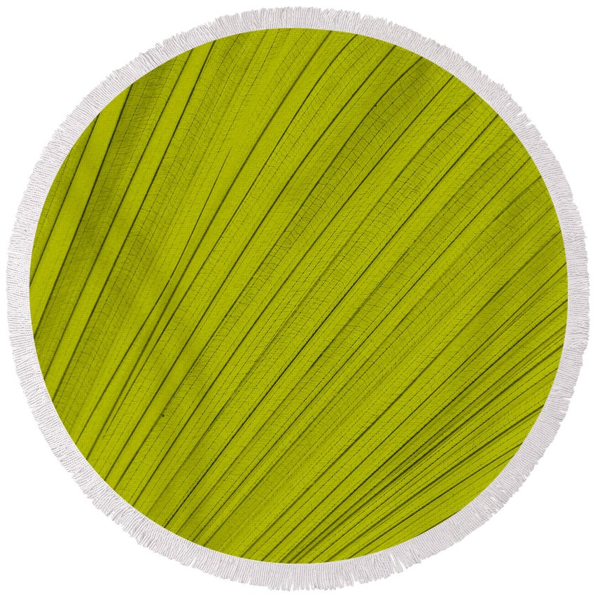 Leaf Round Beach Towel featuring the digital art Leafy Leaf by Michelle Calkins