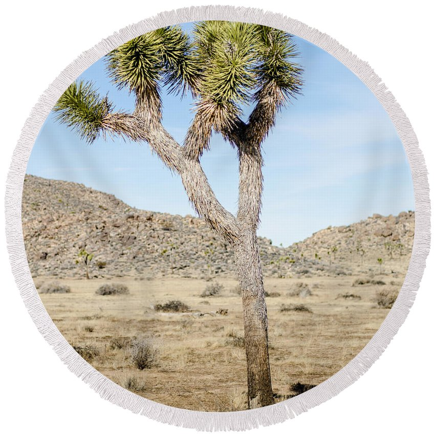 Joshua Tree Round Beach Towel featuring the photograph Leaning Joshua Tree by Alex Snay