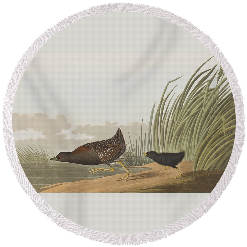 Least Water Hen Round Beach Towel featuring the painting Least Water Hen by John James Audubon