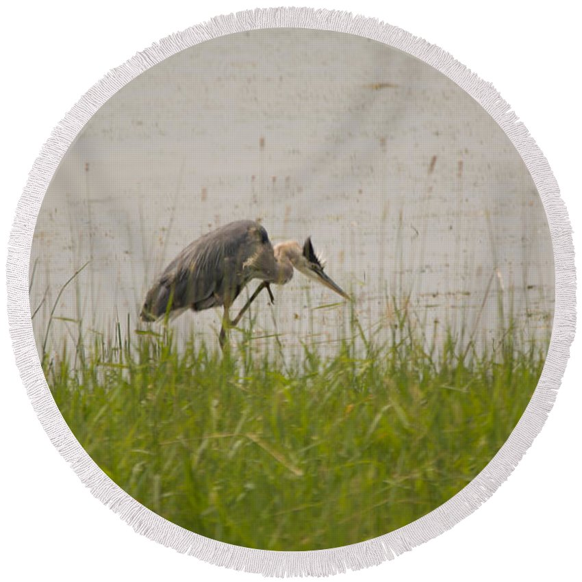 Great Blue Heron Round Beach Towel featuring the photograph Leg Up by Linda Kerkau