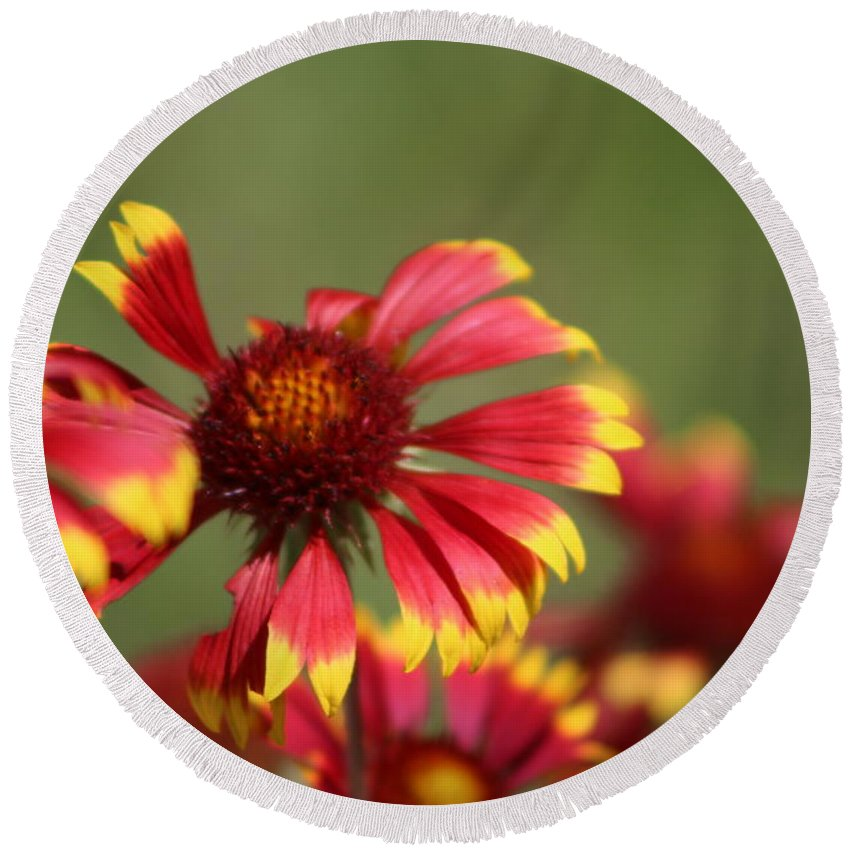 Coneflower Round Beach Towel featuring the photograph Lemon Yellow and Candy Apple Red Coneflower by Colleen Cornelius